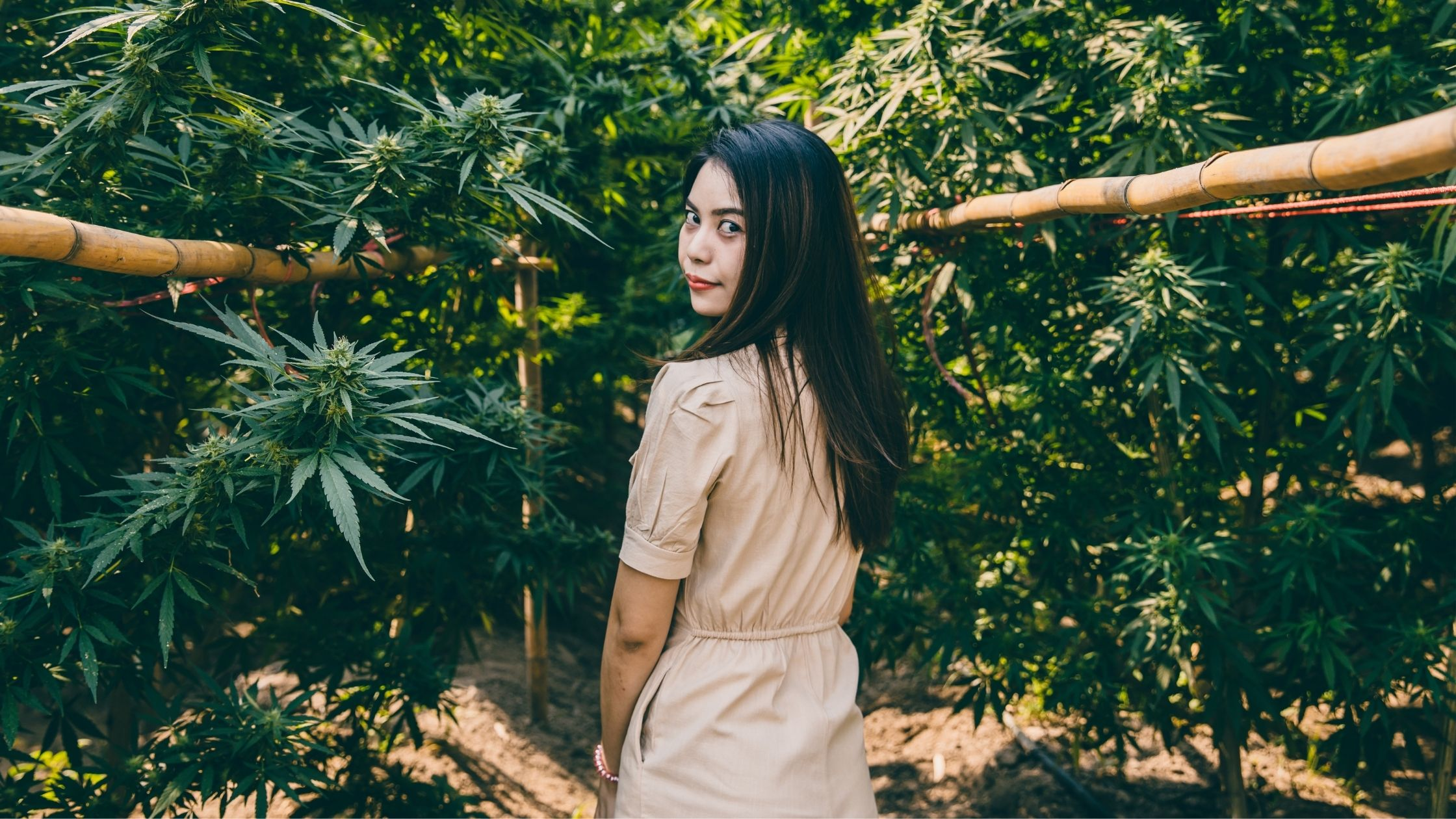 AAPI Owned Cannabis Brands You Should Know